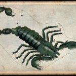 Horoskop Jahres-Vorschau für 2017 – SKORPION