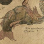 Bedeutung des Fixsterns FOMALHAUT in der Astrologie