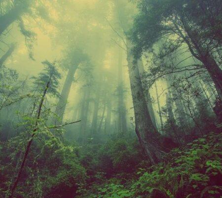 Der Wald ist für viele ein magischer Ort und gilt beispielsweise in Japan schon längst als Kraftort für Wohlbefinden.